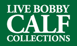live-bobby-calf-collections-module